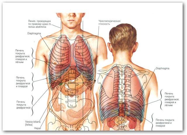 Атлас анатомии человека — фрэнк неттер — atlas of human anatomy.