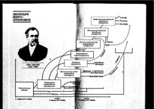 Химическая микробиология - Елинов Н.П. - 1989 год - 448 с.