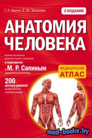 Анатомия человека - Е. Ю. Зигалова, Г. Л. Билич - 2016 год