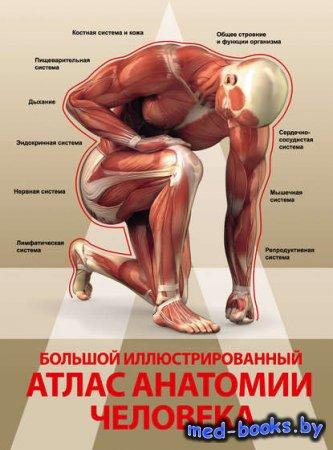 Большой иллюстрированный атлас анатомии человека - Анна Спектор - 2016 год
