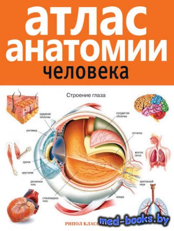 Атлас анатомии человека - В.Б. Марысаев - 2014 год