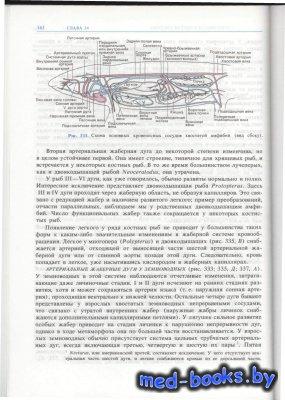 Анатомия позвоночных Том 2 - Ромер А., Парсонс Т. - 1992 год