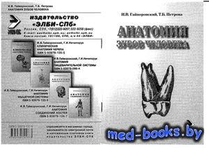 Анатомия зубов человека - Гайворонский И.В., Петрова Т.Б. - 2005 год - 56 с ...