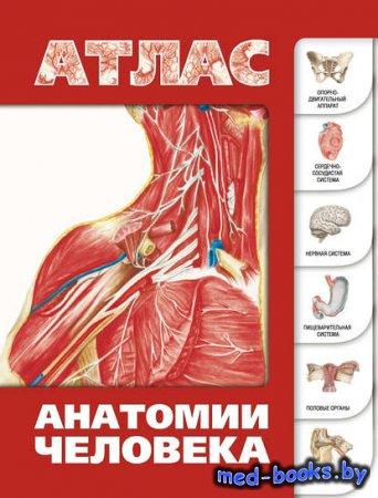 Атлас анатомии человека - Сергей Лёвкин - 2013 год