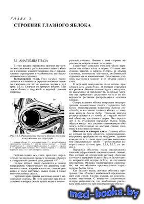 Строение зрительной системы человека - Вит В.В. - 2003 год