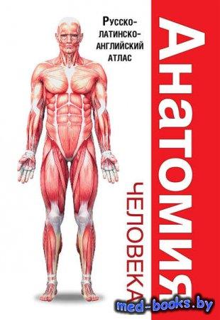 Анатомия человека. Русско-латинско-английский атлас - Л. Н. Палычева, Н. В. ...